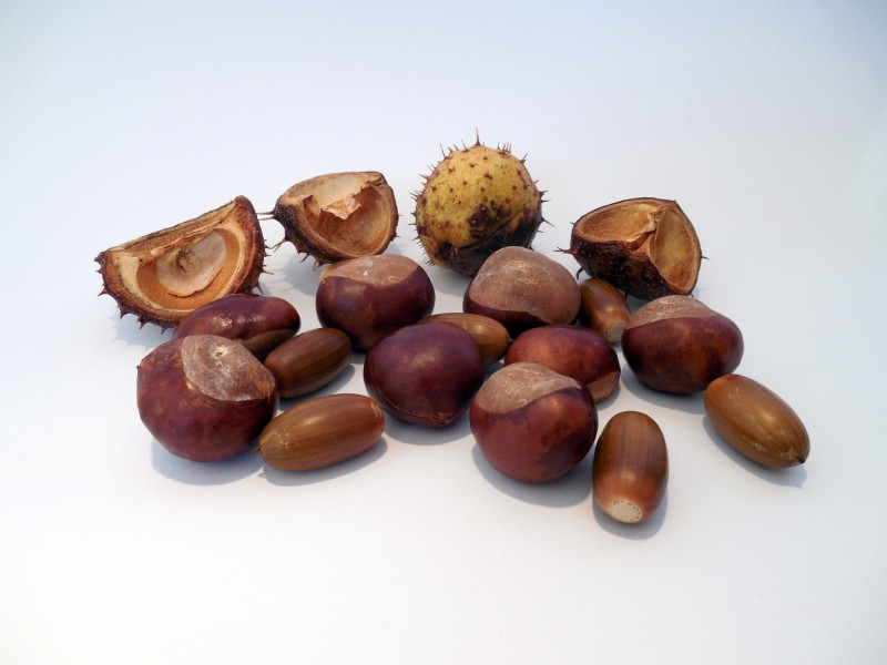 chestnut-acorns-autumn-shiny-brown-decoration